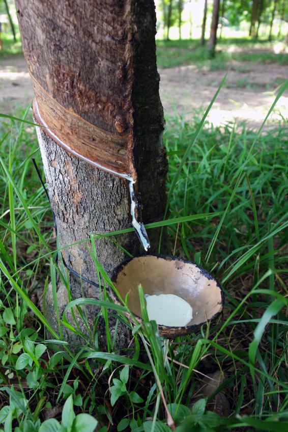 Talalay latex boom natuurlijk